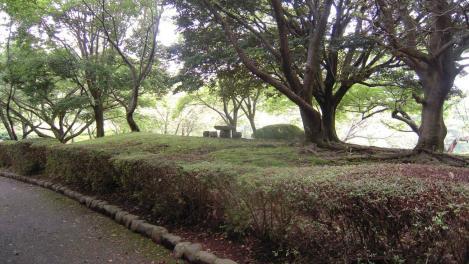 公園の森林浴でマイナスイオンたっぷりと浴びた時の写真です