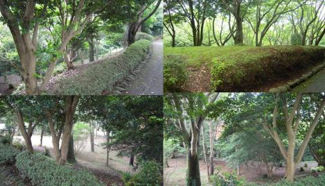公園内の森林浴でマイナスイオンをバリバリ浴びながら歩いた時の写真4枚を1枚に編集した写真です