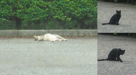岩本山公園の駐車場で死んだ様に眠る野良猫と黒猫が居たが可哀相に捨て猫だろうかのデジカメ写真