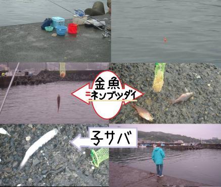 伊東港の防波堤付近では金魚ネンブツダイが多く釣れ子サバと子メジナが多く釣れた