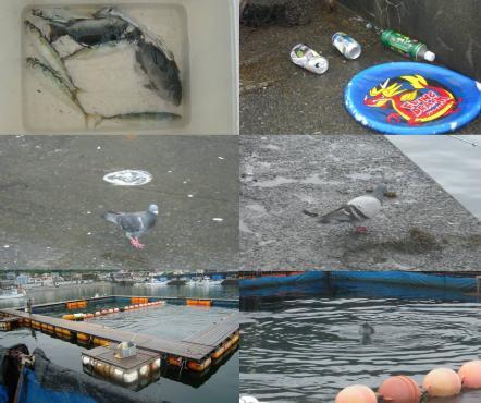 伊東港外防波堤付近で釣れた魚と付近の汚れたゴミの回収と鳩と写真とイルカの養殖所の様なトコとイルカの写真