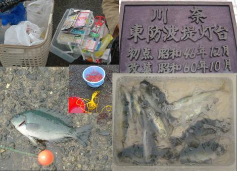 伊東市川奈東防波堤灯台の釣り場では子メジナとネンブツダイとイワシと子サバが釣れた写真