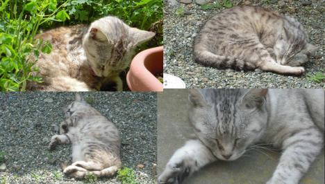 この暑さでも何処でも寝る猫のチータの写真です