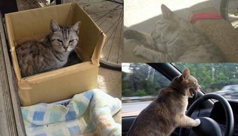 地域猫がのんびり暖まり運転暴走する