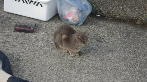 宇久須港のテトラポット付近の野良猫デジカメ写真