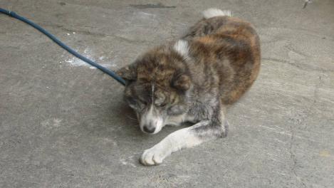 太い足した大型犬だが落ち着いている秋田犬のデジカメ写真で幕を閉じた今回の地震が起きても海釣りに挑戦したデジカメ写真日記だった