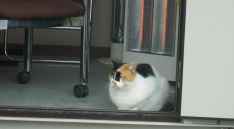 熱海港海釣り施設駐車場管理人室の電気ストーブに暖まる野良猫のデジカメ写真