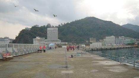 熱海港も晴れてきた頃にトンビ達が餌である魚を求めて来たが魚は釣れずボウズだった写真