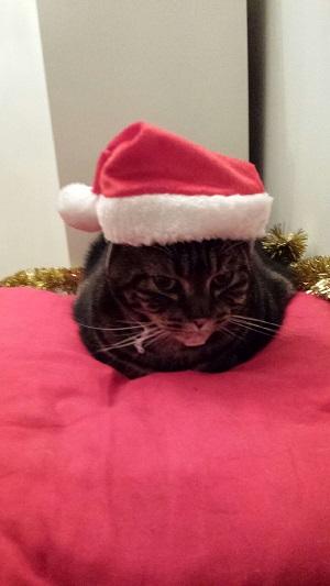 クリスマスだにゃー