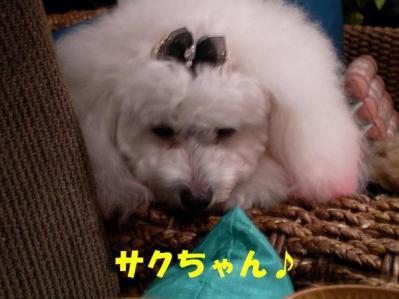 ブログ20 001