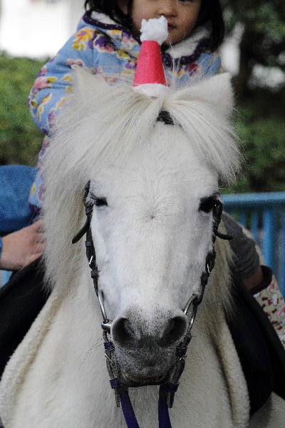PonyXmas02