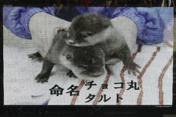 TobeZOKotumeOmeimei04