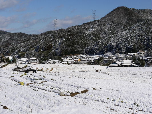 河之内・音田棚田雪景色 130118 02