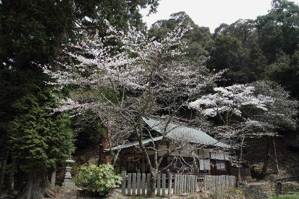 土谷三嶋三嶋神社 130330 02