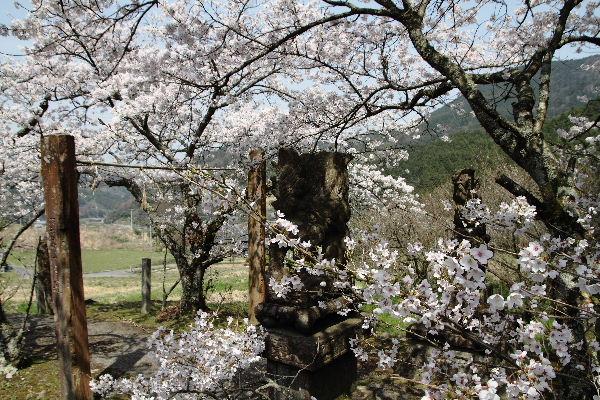 井内吉井神社・桜 130330 01