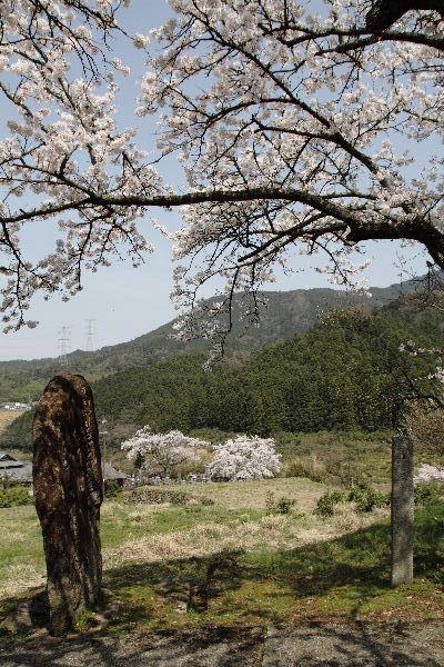井内吉井神社・桜 130330 02