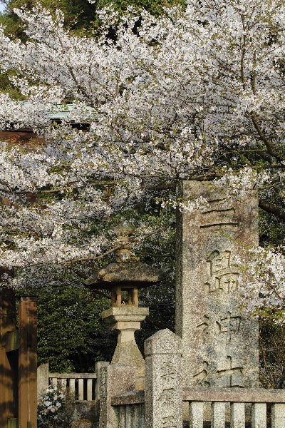 則之内三嶋神社・桜 130330 02