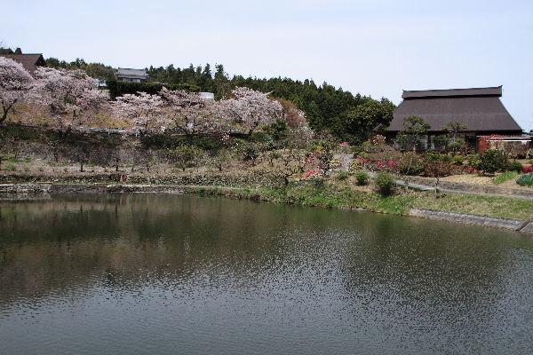 小田立石・尾首の池桜 130404 020