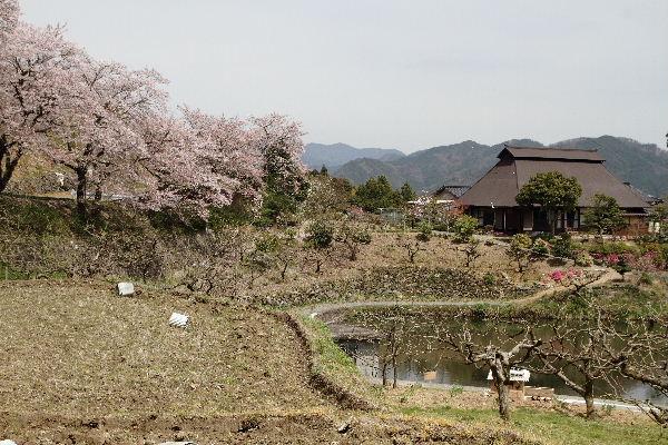 小田立石・尾首の池桜 130404 023