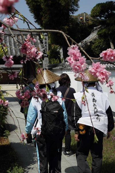 浄土寺・枝垂花桃 130413 01