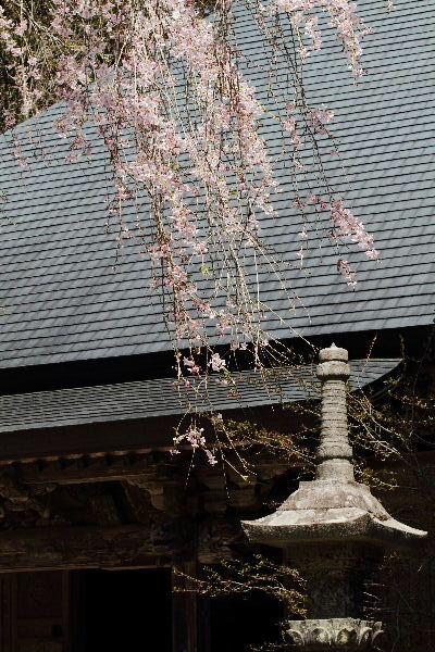 高縄寺 130418 05