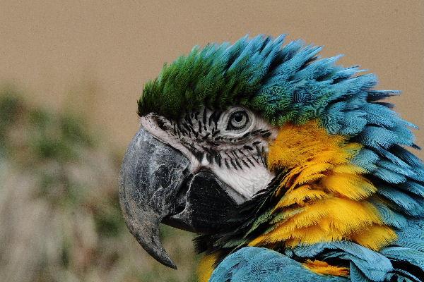 多摩動物公園 ルリコンゴウインコ 130324 007