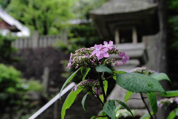 惣河内神社 黒姫 130530 05