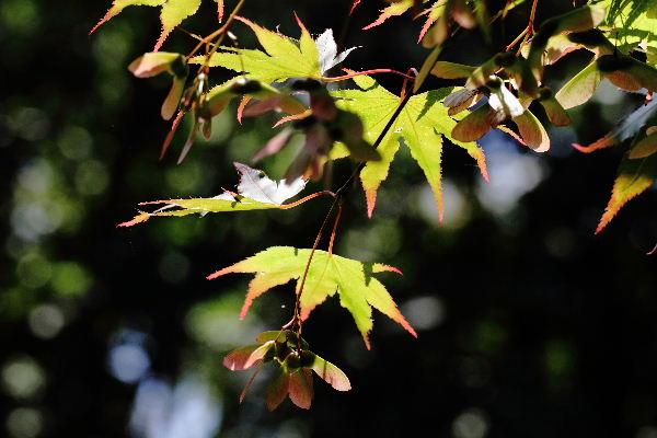 森の交流センター ノムラカエデ 1300707 01