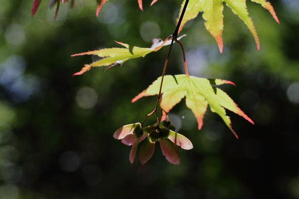 森の交流センター ノムラカエデ 1300707 02