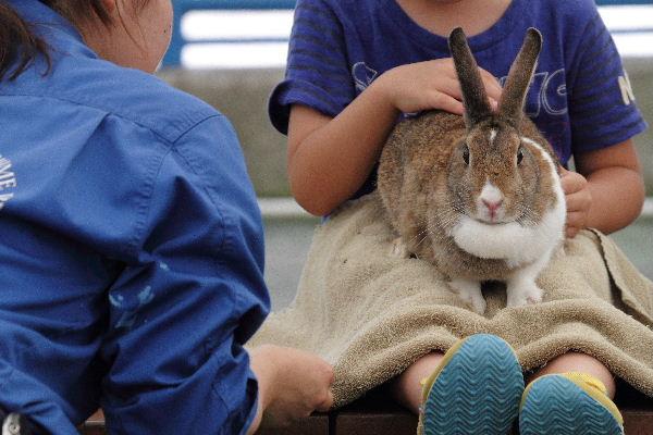 TobeZoo ウサギモルモットのスキンシップ 130720 003