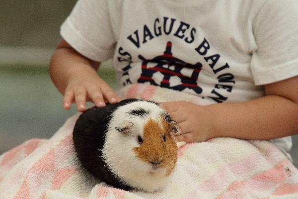 TobeZoo ウサギモルモットのスキンシップ 130720 004