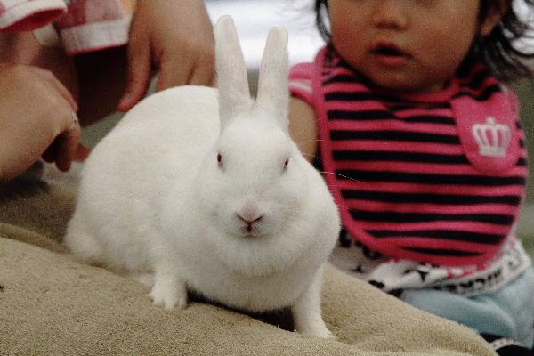 TobeZoo ウサギモルモットのスキンシップ 130720 005