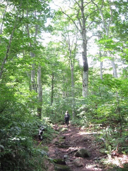 ブナの森林の中で