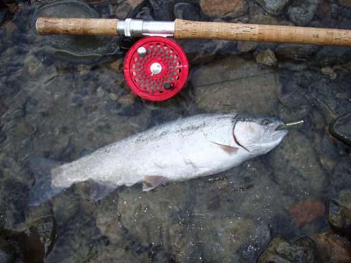 釣友の釣ったレインボウ