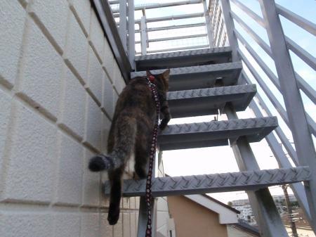 階段なんて怖くニャ~い