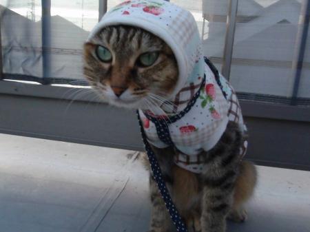 あたしが変な猫ニャ