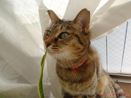 猫草かニャ?