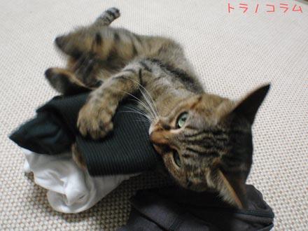 やっぱり靴下が一番ニャ