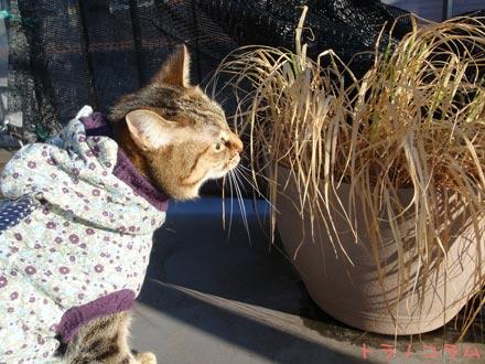 猫草のニオイだニャ