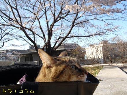 桜にゃんて・・・・