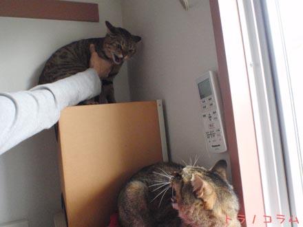 うわっ、ネコだー。恐ーい。