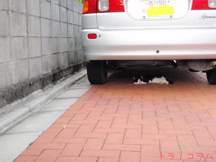 小笠原では猫はあんまりアレなんです。