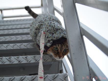 猫草食べたのニャ