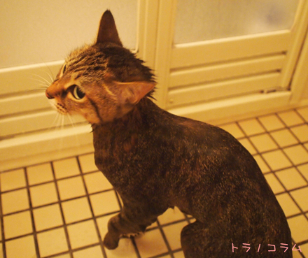 にゃ~、シャワー嫌いにゃ~