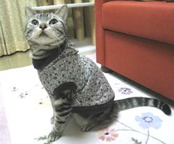 大人っぽいお洋服も似合うのニャ