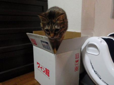 箱からピョーン