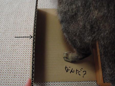 snap_toranokolam_20104218646.jpg
