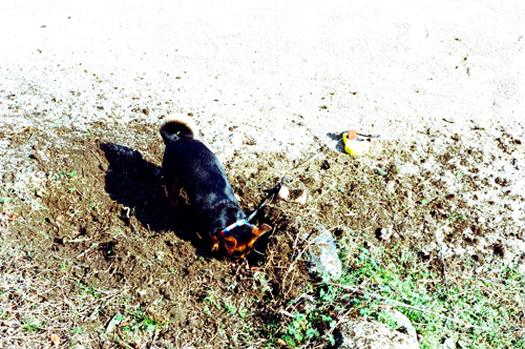 掘り掘りおはぎブログ