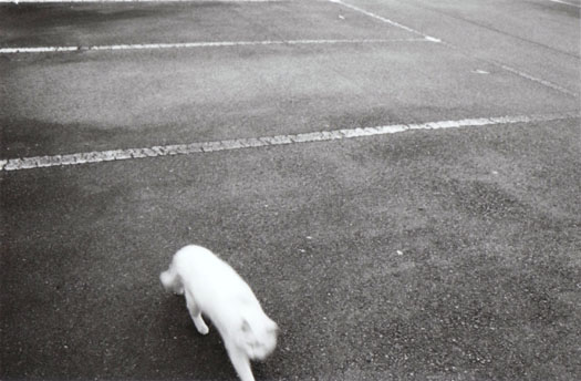 逃げ猫。ブログ