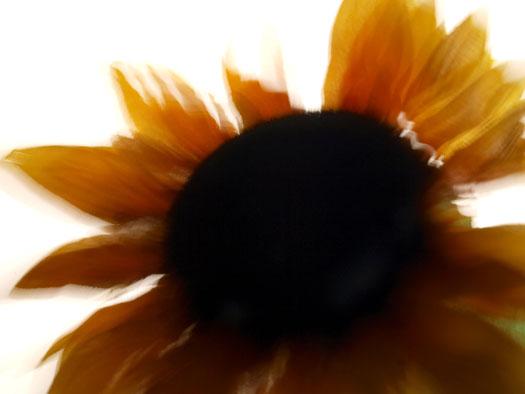 sun flowerブログ